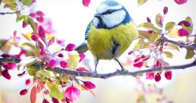 Proleće – pisani sastavi na temu proleća